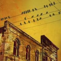 Birds on a Wire I Fine-Art Print