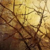 Ombre Branches I Fine-Art Print