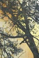 Bubbly Branches Fine-Art Print
