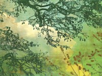 Branches and Clouds Fine-Art Print