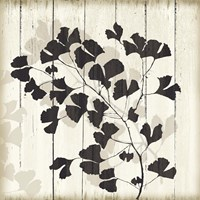 Shadow on Wood I Fine-Art Print