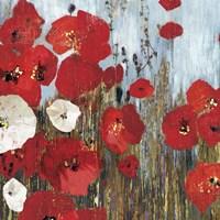 Passion Poppies I Fine-Art Print