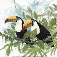 Toucans Fine-Art Print