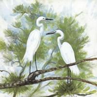 Herons Fine-Art Print