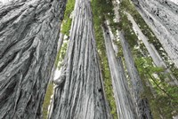 Redwoods Forest IV BW with Color Fine-Art Print