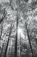 Autumn Forest I BW Fine-Art Print