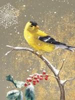 Winter Birds Goldfinch Color Fine-Art Print