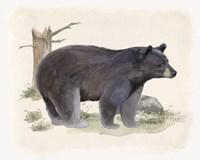 Wilderness Collection Bear Fine-Art Print