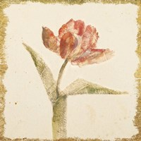 Vintage Flaming Parrot Tulip Crop Fine-Art Print