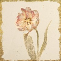 Vintage May Wonder Tulip Crop Fine-Art Print