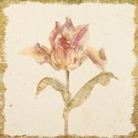 Vintage Zoomer Schoon Tulip Crop Fine-Art Print