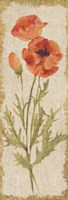 Poppy Panel on White Vintage Fine-Art Print