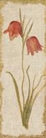 Red Tulip Panel on White Vintage Fine-Art Print