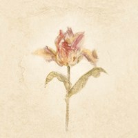 Zoomer Schoon Tulip on White Crop Fine-Art Print