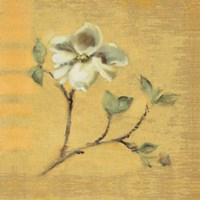 Dogwood Blossom on Gold Fine-Art Print