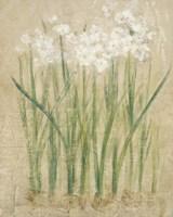 Narcissus Cool Fine-Art Print