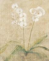 Orchid Cool Fine-Art Print