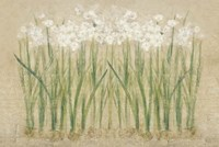 Narcissus Row Cool Fine-Art Print