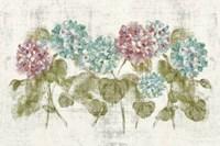 Vibrant Row of Hydrangea No Border Fine-Art Print