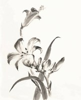 Sumi Daylily II Fine-Art Print
