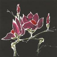 Magnolia on Black III Fine-Art Print