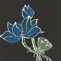 Lotus on Black VII Fine-Art Print