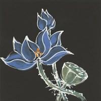 Lotus on Black VI Fine-Art Print