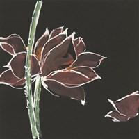 Lotus on Black V Fine-Art Print