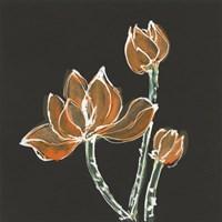 Lotus on Black IV Fine-Art Print