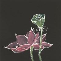 Lotus on Black III Fine-Art Print
