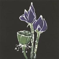 Lotus on Black II Fine-Art Print