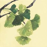 Gingko Leaves I Dark Fine-Art Print