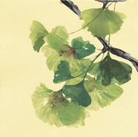 Gingko Leaves II Dark Fine-Art Print