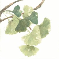 Gingko Leaves I on White Fine-Art Print