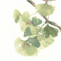 Gingko Leaves II on White Fine-Art Print