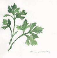 Italian Parsley II Fine-Art Print