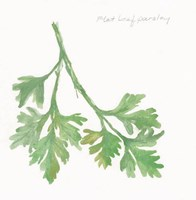Flat Leaf Parsley Fine-Art Print