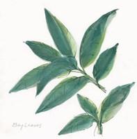 Bay Leaf Fine-Art Print
