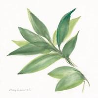 Laurel Bay Fine-Art Print