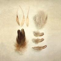 Feathers II Square Fine-Art Print
