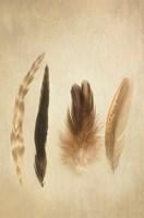 Feathers I Fine-Art Print