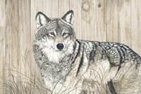 Wolf in Grass on Barn Board Fine-Art Print