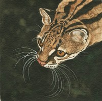 The Margay Fine-Art Print
