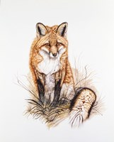 Red Fox Fine-Art Print