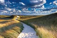 Philbin Beach Path Fine-Art Print