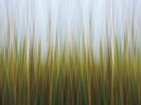 Seagrass Canvas Fine-Art Print