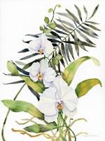 Botanical Phalaenopsis Fine-Art Print