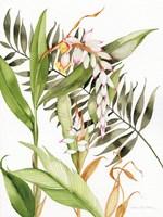 Botanical Shell Ginger Fine-Art Print