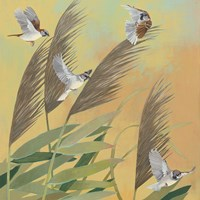 Sparrows and Phragmates Sq Fine-Art Print