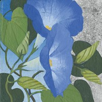 Morning Glorious II Silver Fine-Art Print